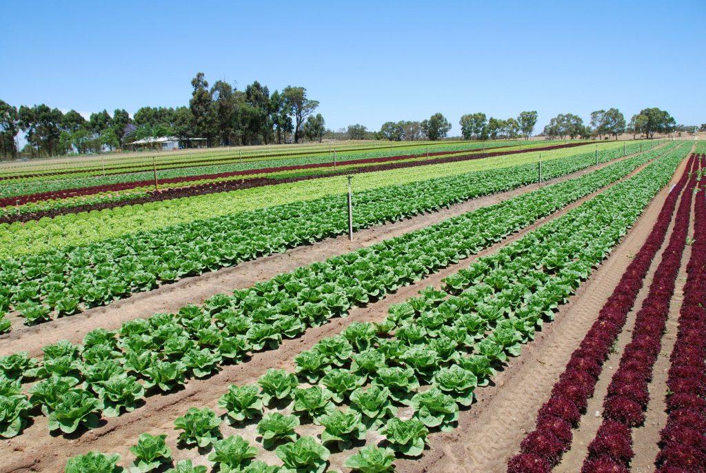 Produktivitas ekosistem pertanian